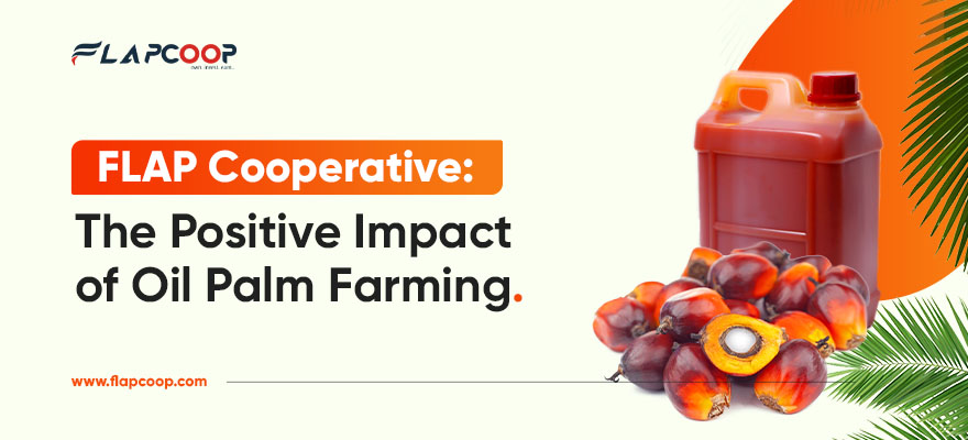 FLAP Cooperative The Positive Impact Of Oil Palm Farming